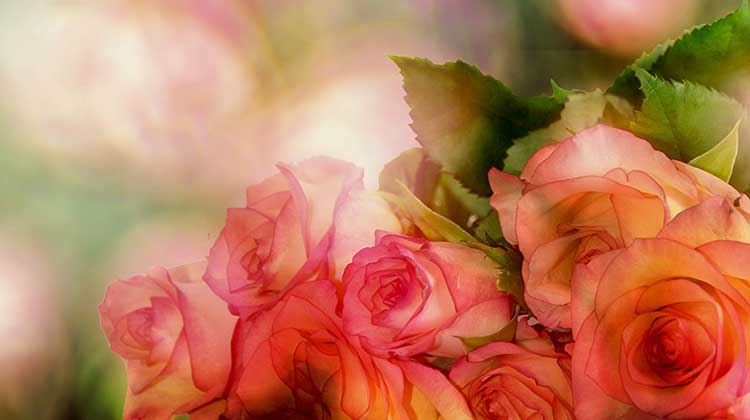 Roses love unconditionally